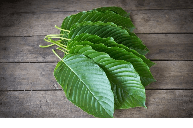 Kratom & What The FDA Got Wrong